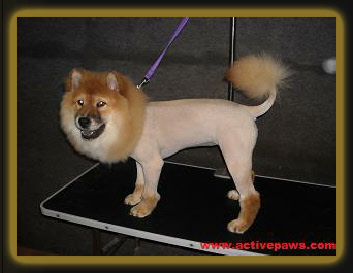 Click on your breed's picture for breed & grooming information plus