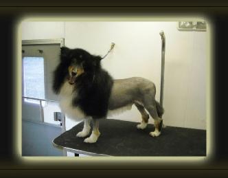 Dog Boarding Kennels In Northern Kentucky